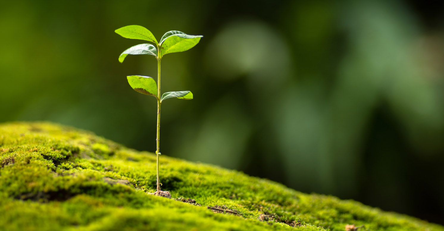 umweltfreundliche-nachhaltige-brillen